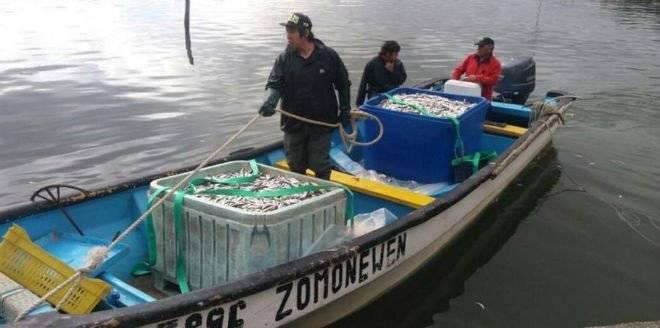 sardina660x550.jpg