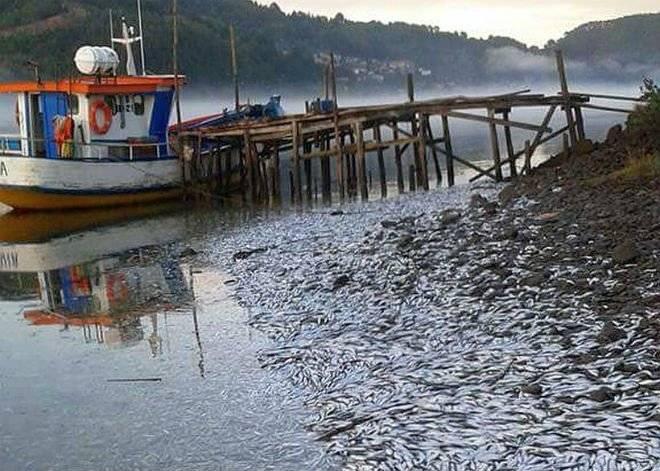 sardinas2660x550.jpg