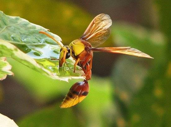 thirstyinsects3550x410.jpg