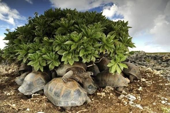 tortoises.adapt.590.1660x550.jpg