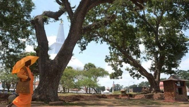 tree3660x550.jpg