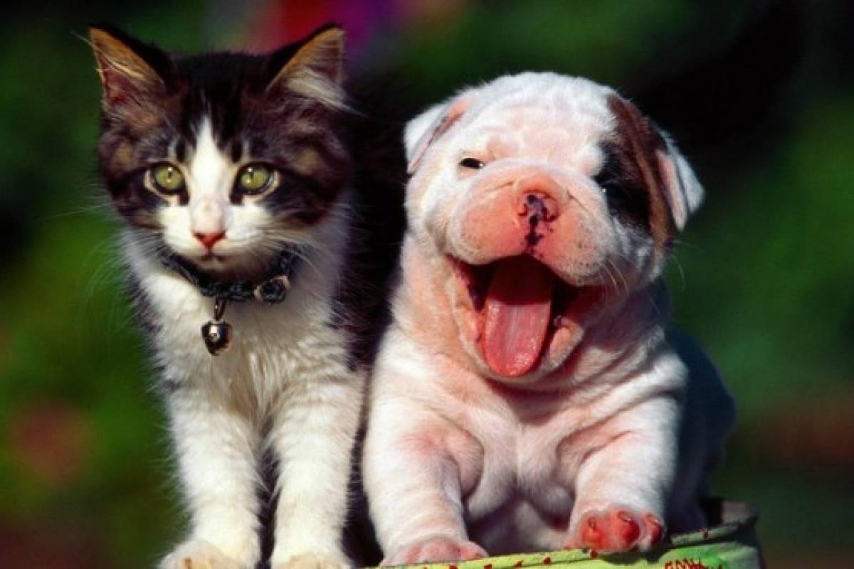 30 Frases Para Celebrar El Dia Mundial De Los Animales Belelu