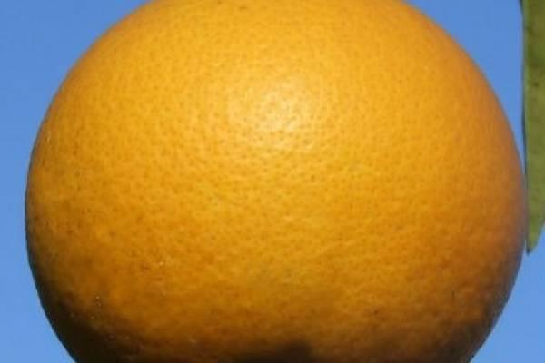 goicoechea piel de naranja sirve