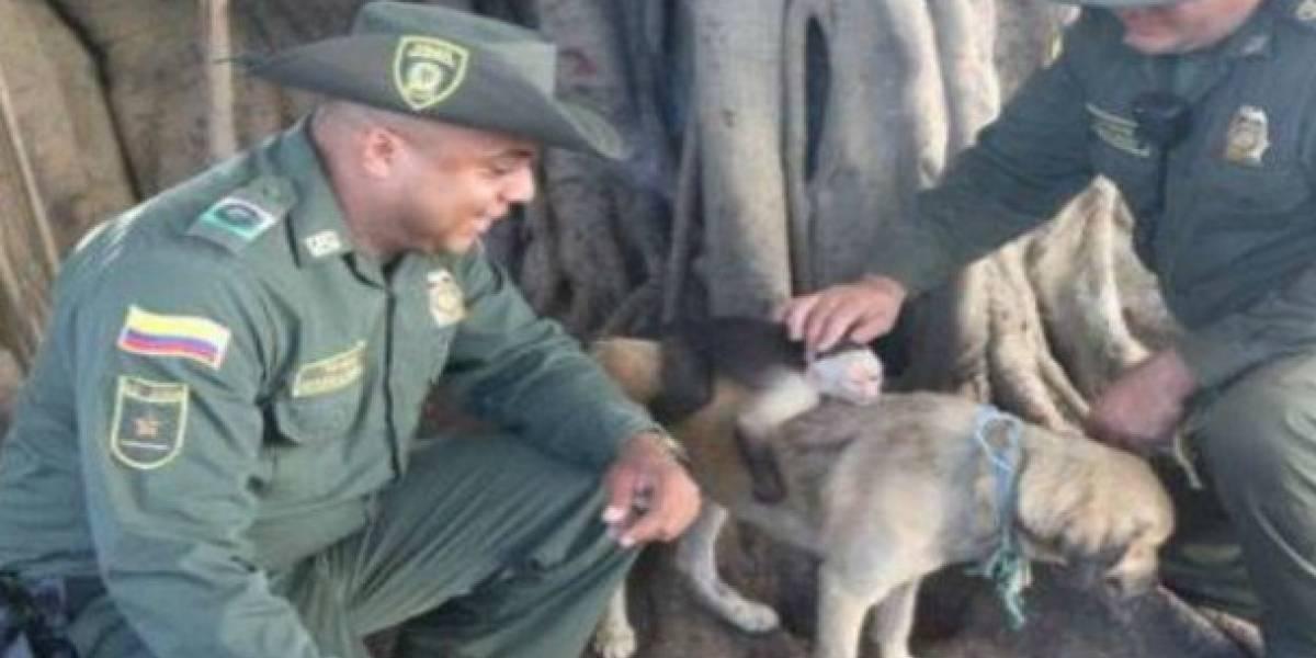 La historia de la perrita que adoptó a un mono capuchino en Cartagena