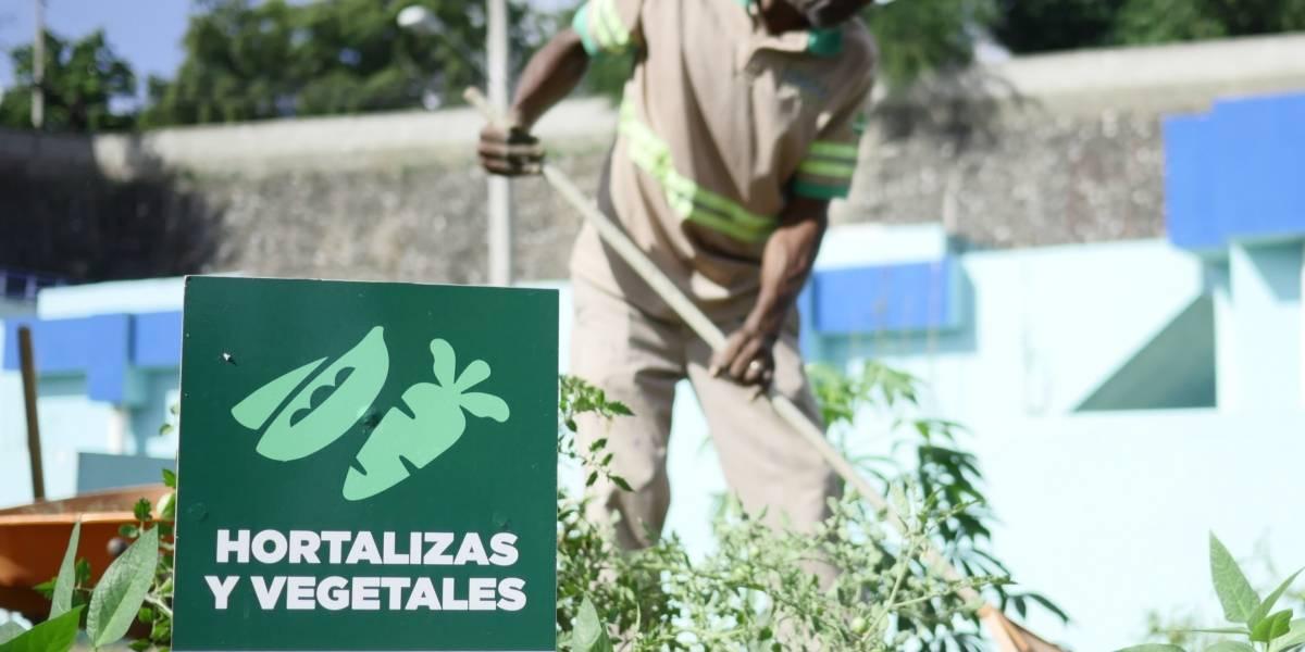 Programa comunitario germina más 1500 plantas vegetales