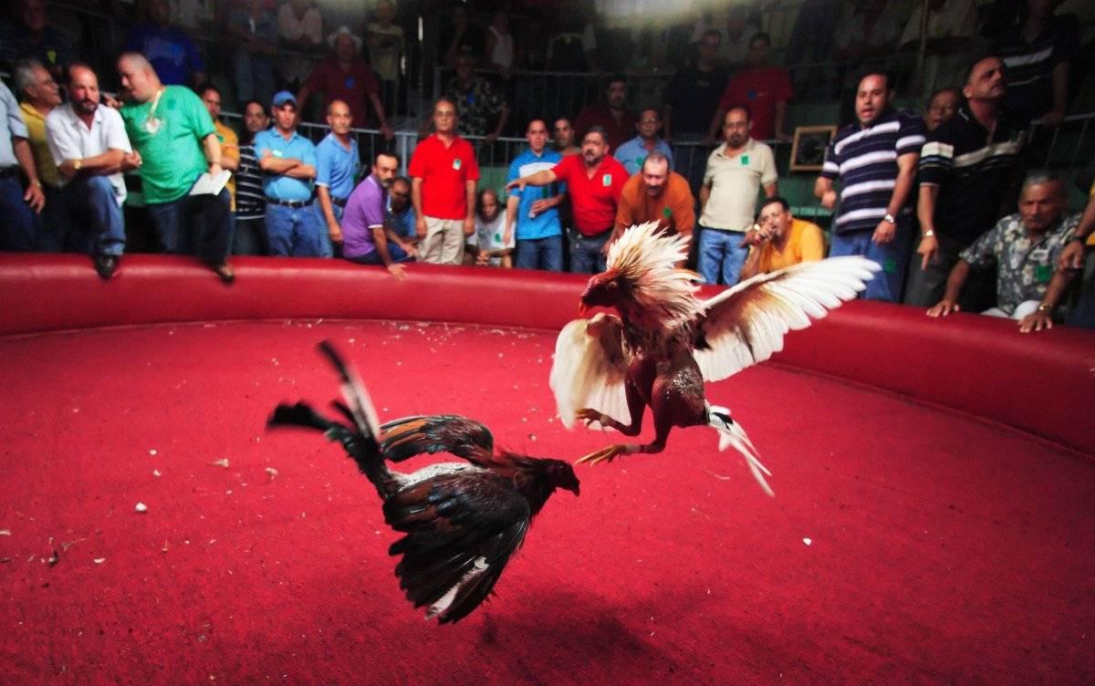 Peleas de gallo