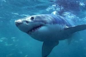 https://www.publimetro.com.mx/mx/bbc-mundo/2018/02/19/por-que-el-tiburon-blanco-no-es-un-monstruo-que-come-personas.html