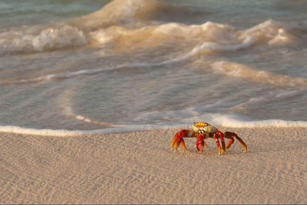 Los cangrejos no tienen orejas pero oyen muy bien - VeoVerde | Nueva ...