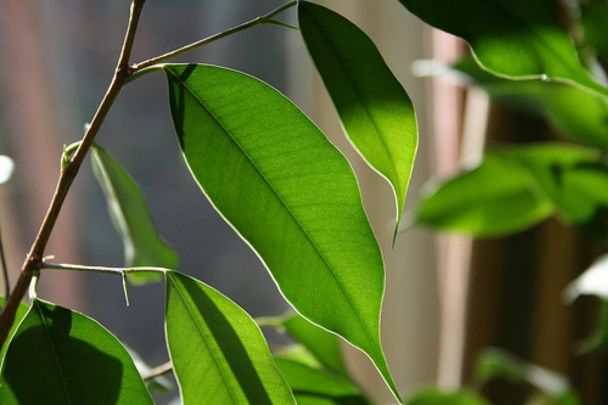 10 plantas de interior que limpian el aire veoverde nueva mujer - Plantas de interior fotos ...