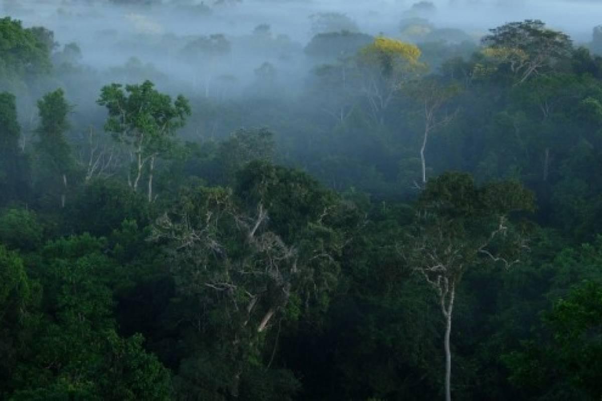 Cu ntos rboles hay en el amazonas veoverde nueva mujer for Cuantos tipos de arboles hay en el mundo