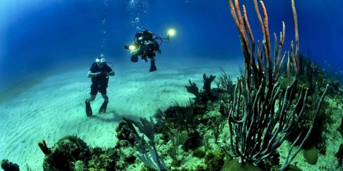 Proyecto invita a los aficionados del buceo a participar en interesantes investigaciones científicas