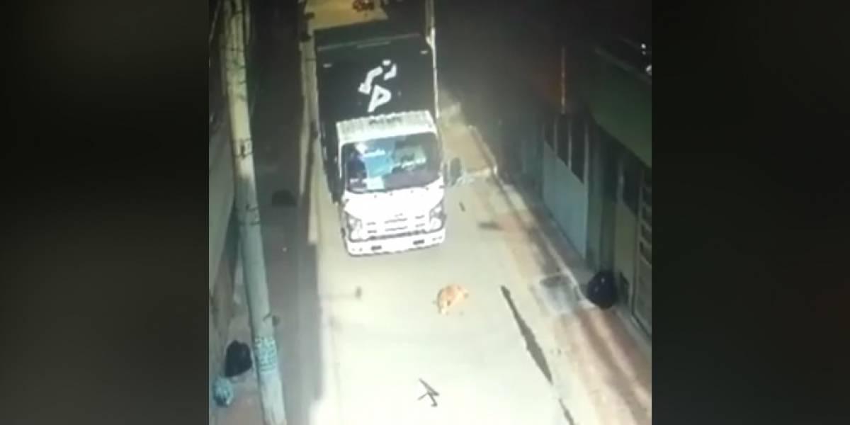 Denuncian caso de maltrato animal: conductor atropelló a perrito en Bogotá y lo dejó abandonado