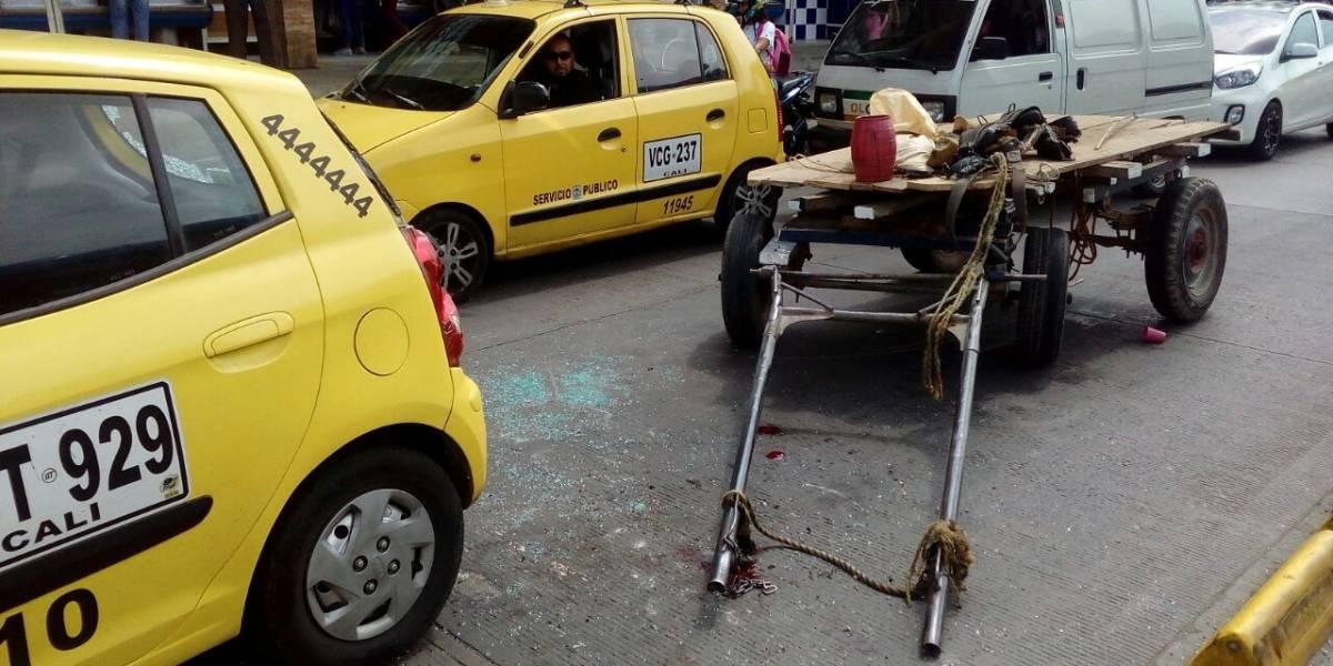¡Pobre yegua!, carretilla protagonizó accidente de tránsito en Cali
