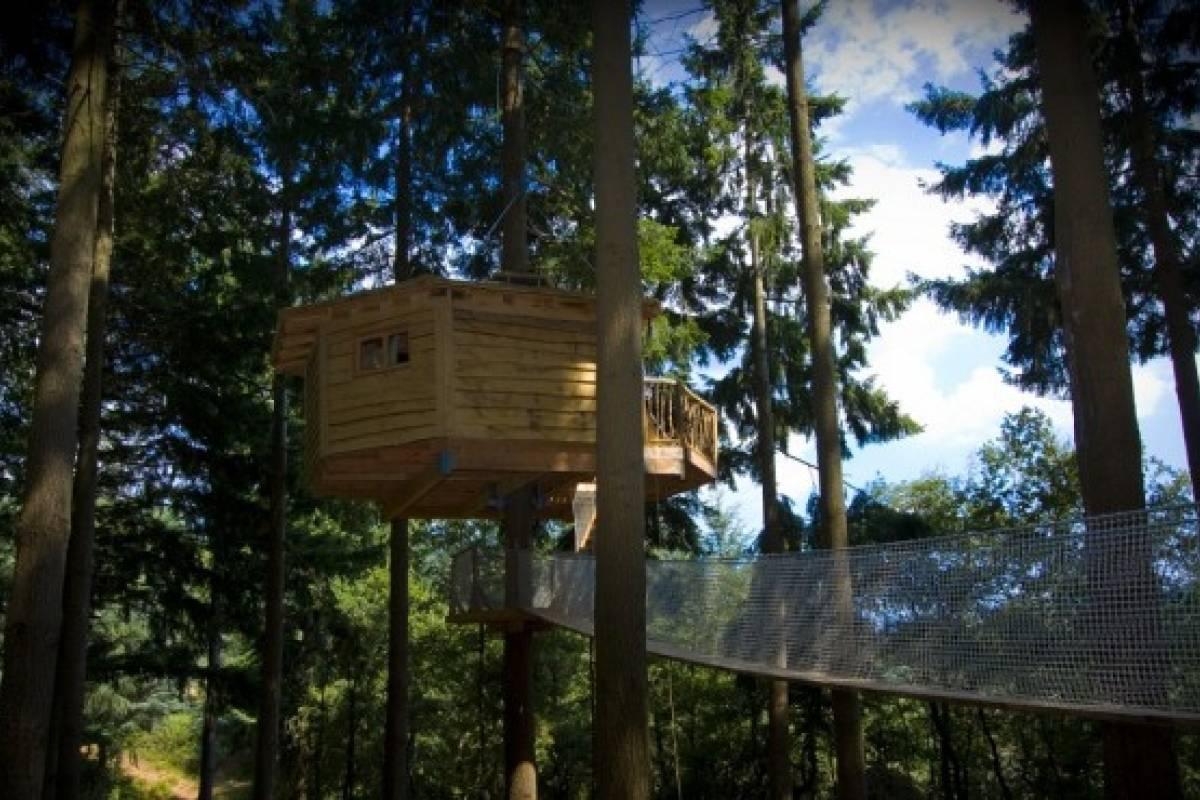 Mira las mejores 5 casas de árbol del mundo - VeoVerde | Nueva Mujer