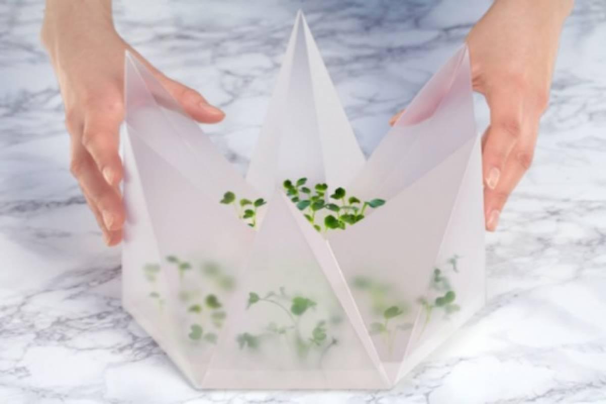 Microjardín para hacer germinar tus propios vegetales en casa
