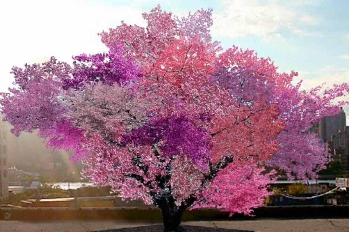 Crean un árbol que tiene más de 40 frutas a la vez