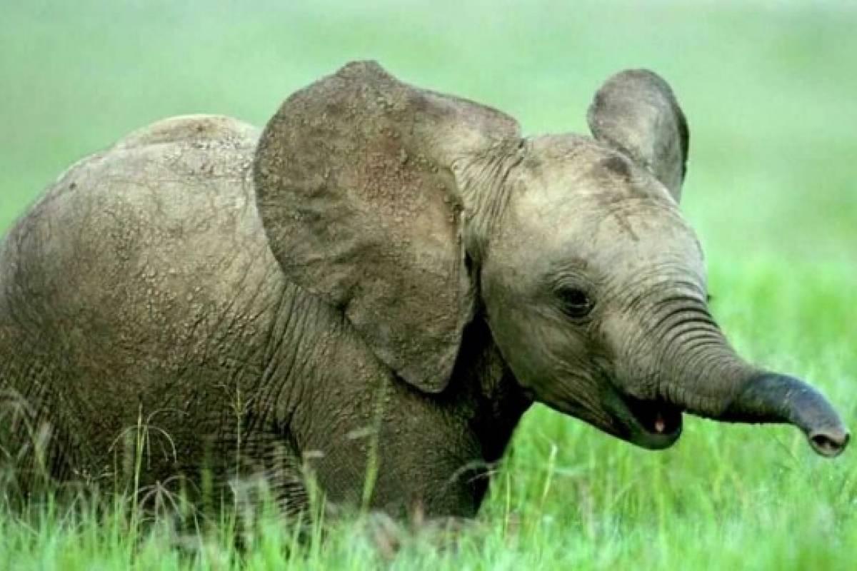 En Peligro De Extinción: Los 10 Animales En Peligro De Extinción Según La WWF