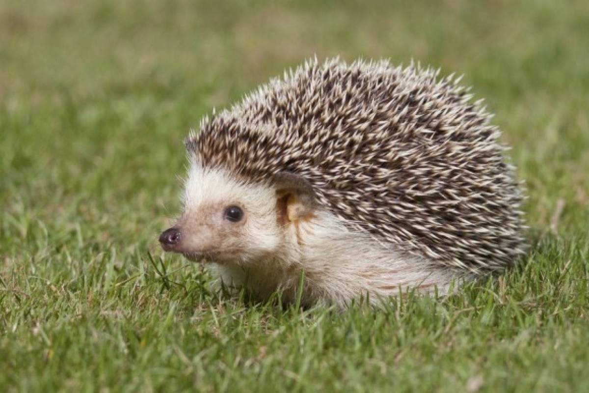 Los animales ex ticos no son mascotas ser consciente for Imagenes de jardines exoticos