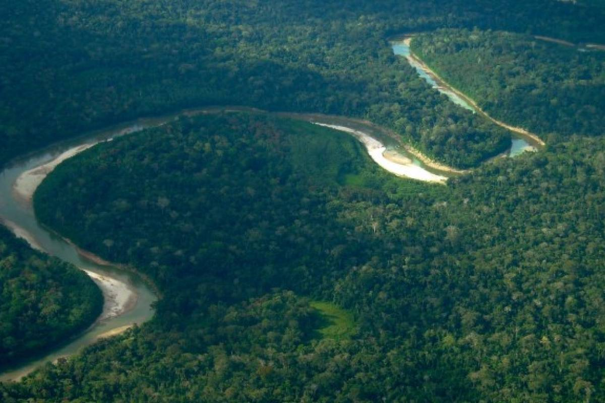 Amazónicos exigen consulta previa por construcción de carretera en pleno Bosque Purús [Perú] - VeoVerde