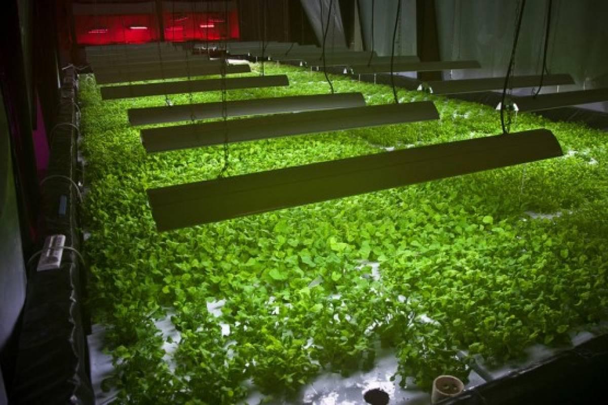 """""""La Planta"""", un huerto vertical que funcionará con residuos de comida"""