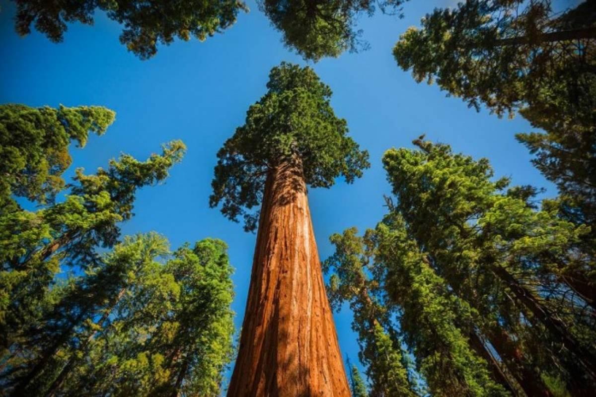 Resultado de imagen para Los árboles combaten el cambio climático
