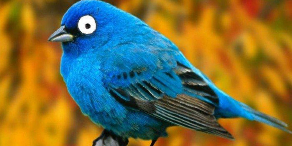 Twitter prueba nueva etiqueta para identificar quién empezó un hilo