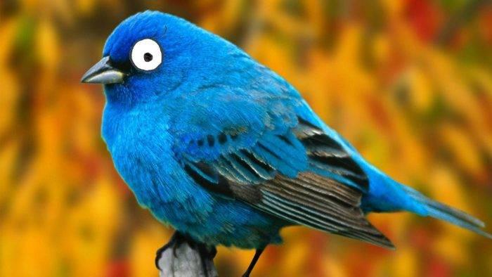 Twitter desactivó cuentas con miles de followers por robar tweets