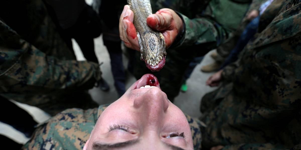 Soldados bebem sangue de cobra durante treinamento militar na Tailândia; FOTOS