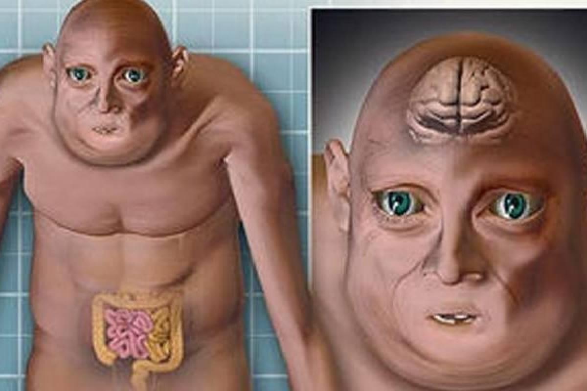 O Hombres del futuro tendrán cerebro y testículos más pequeños entre ...