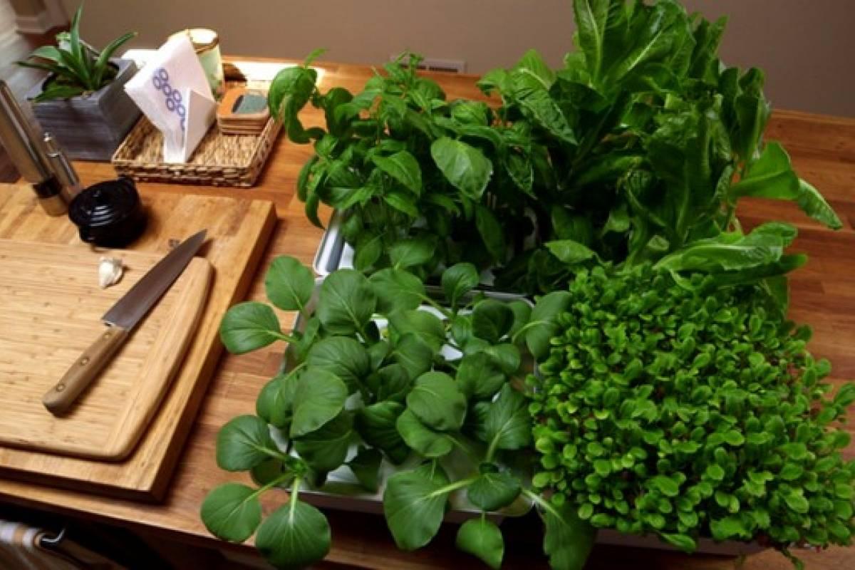 Nanofarm el proyecto perfecto para cultivar vegetales en casa veoverde nueva mujer Cultivar vegetales en casa
