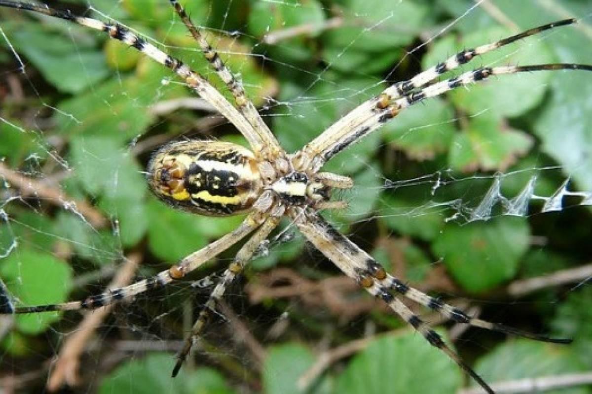 El truco de las arañas para atraer a sus víctimas - VeoVerde | Nueva ...