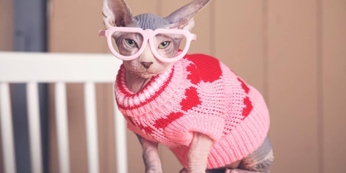 Día Internacional del Gato: estas son algunas de las razas más extrañas