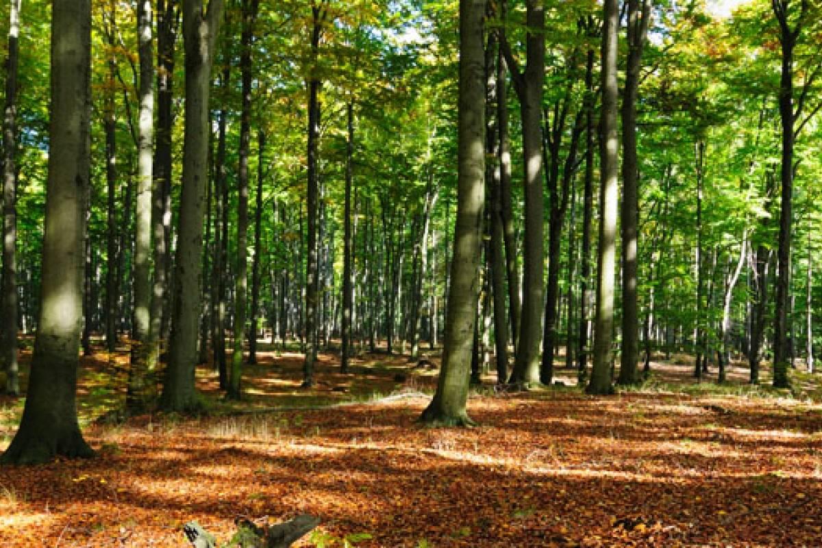Qu sucede con los sitios forestales en m xico for Materiales para un vivero forestal