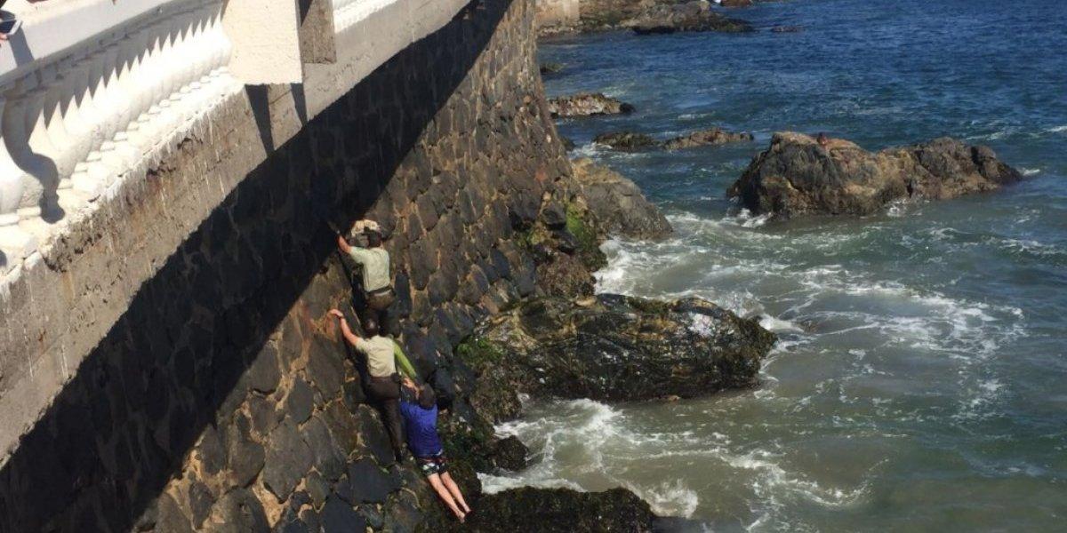 """""""Ellos son los que hacen la diferencia"""": Carabineros rescatan a perro atrapado en las rocas en Viña y reciben el amor de las redes sociales"""