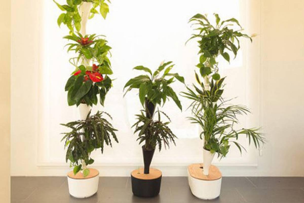 Citysens, el sistema hidropónico para crear un jardín purificador de aire