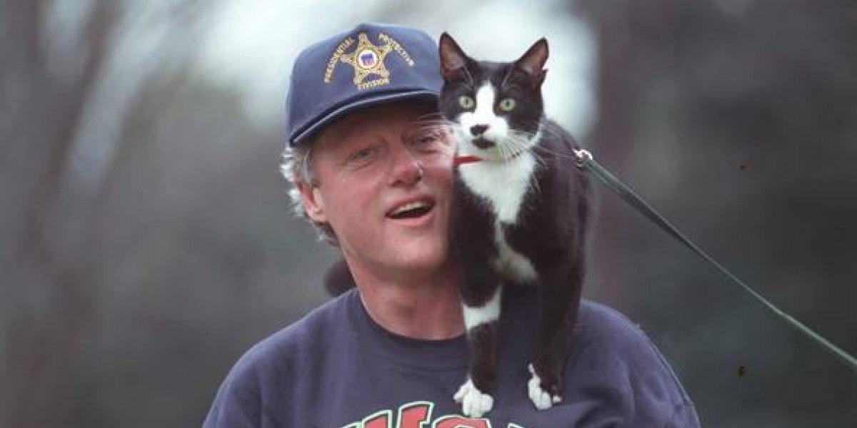 Este es el origen del Día Internacional del Gato