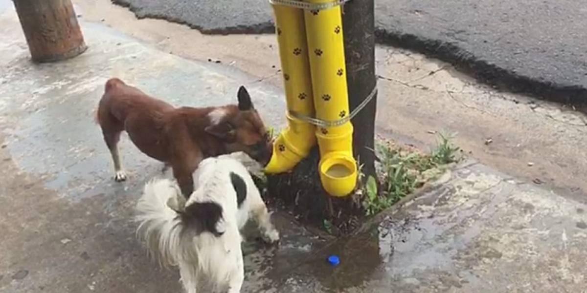 Comerciante cria comedouro feito com tubos de PVC para cães de rua e ação viraliza