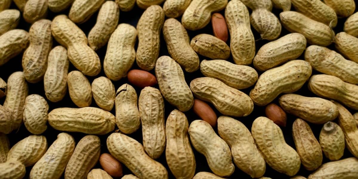 Desarrollan el primer tratamiento contra la alergia al maní