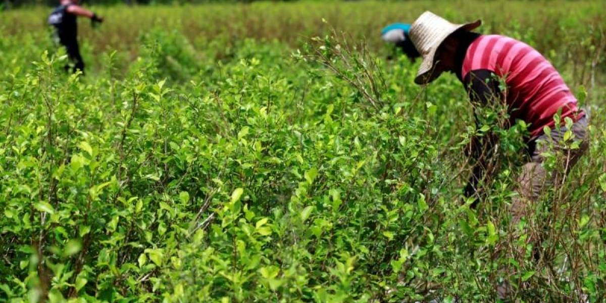 Militares ecuatorianos fueron atacados por custodios de plantaciones de coca