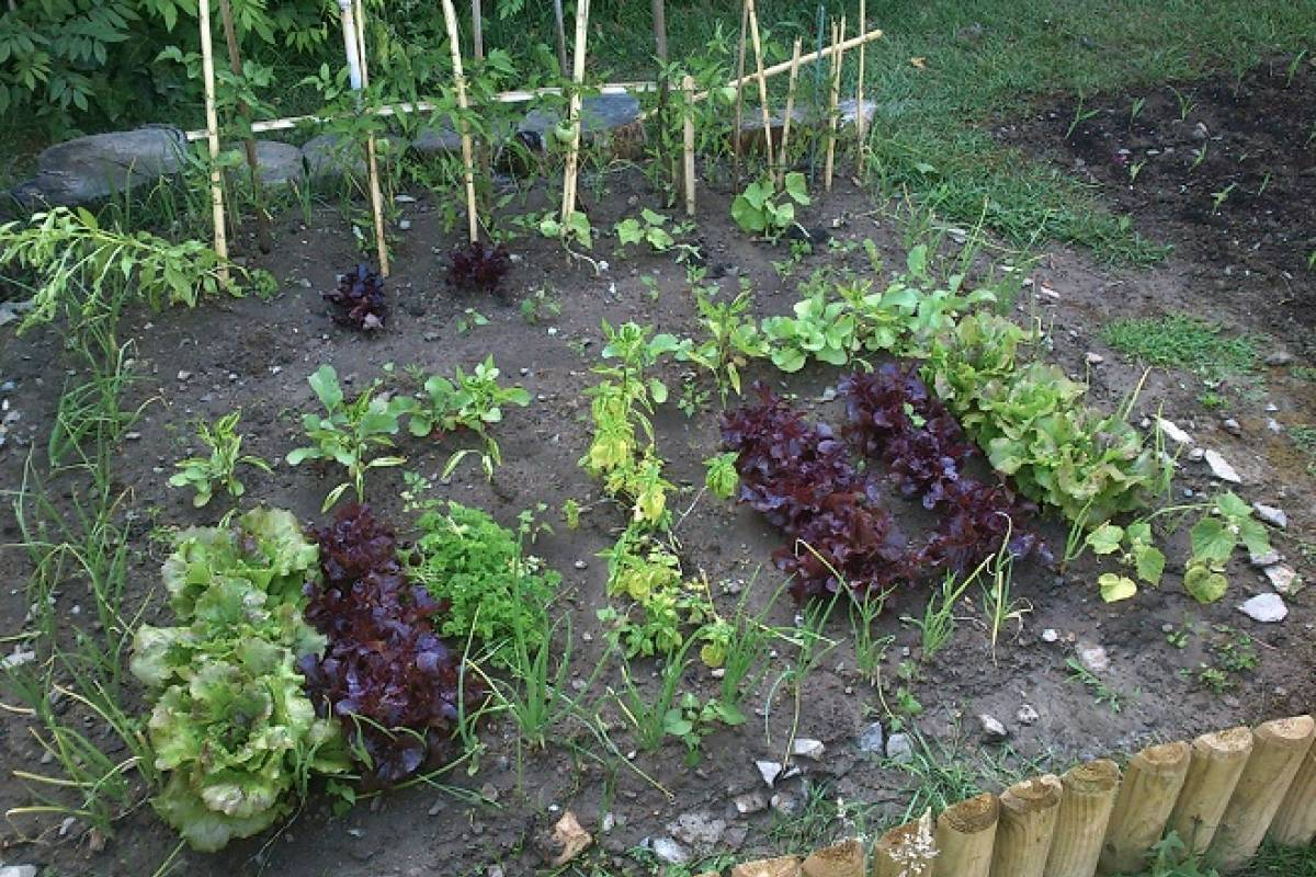 Sencilla huerta de un metro cuadrado para tu patio o for Bioguia jardines