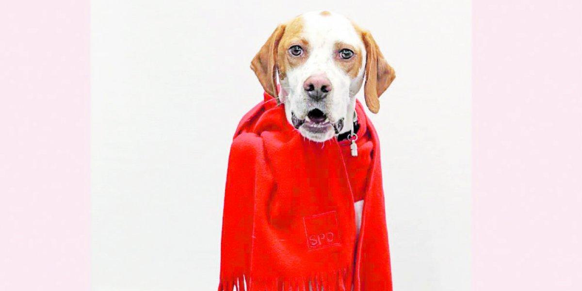 Una perra fue inscrita como militante de un partido alemán