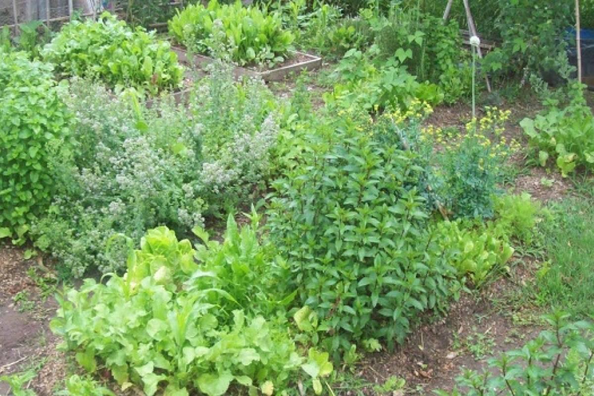 plantas amigas parte 1 consejos para saber qui n con On plantas que se pueden sembrar juntas