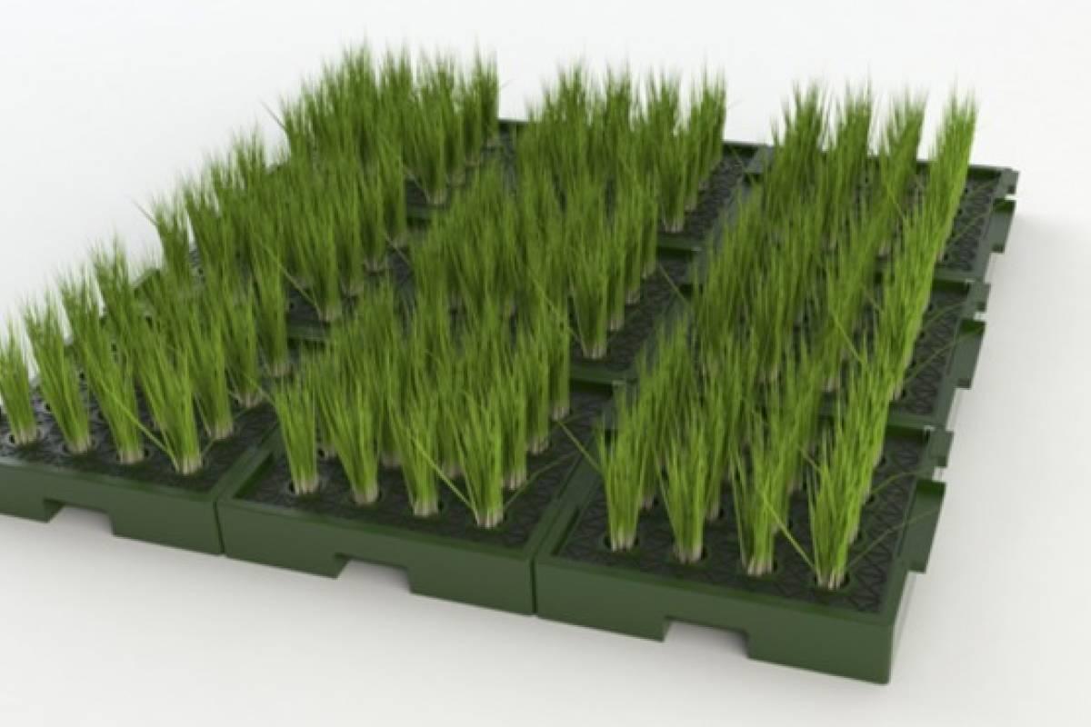 """Una compañía holandesa """"cosecha"""" electricidad de las plantas"""