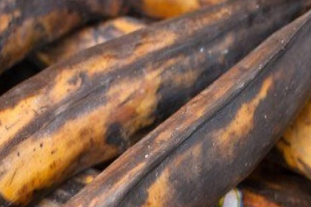 Plátanos bien maduros son capaces de combatir el cáncer