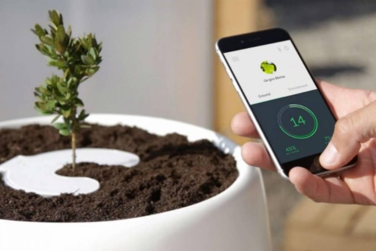 Urna tecnológica convierte las cenizas de tus seres queridos en árboles