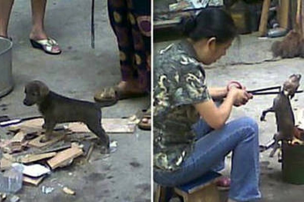 puppies torture and satisfying taste Sign the petition urging them to stop the cruel dog and cat meat trade the dog meat is wrongly because people believe the torture makes the meat taste.