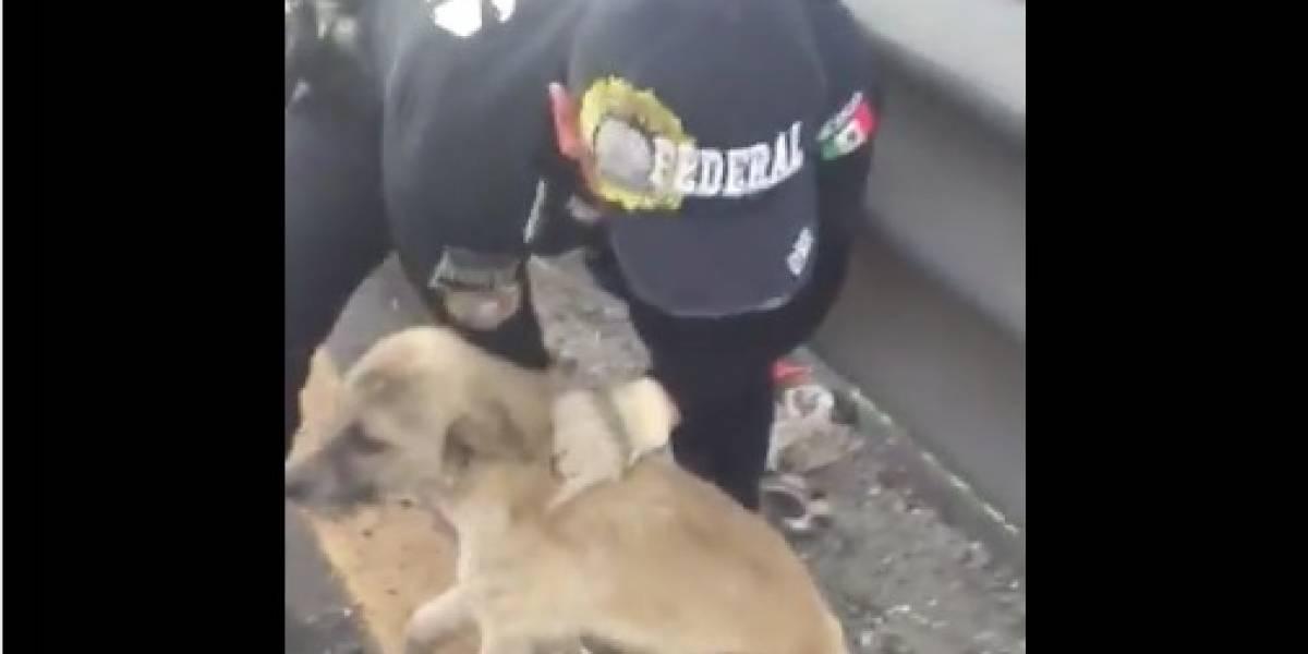 'Camilo', el perro rescatado que se convirtió en mascota de la Policía Federal