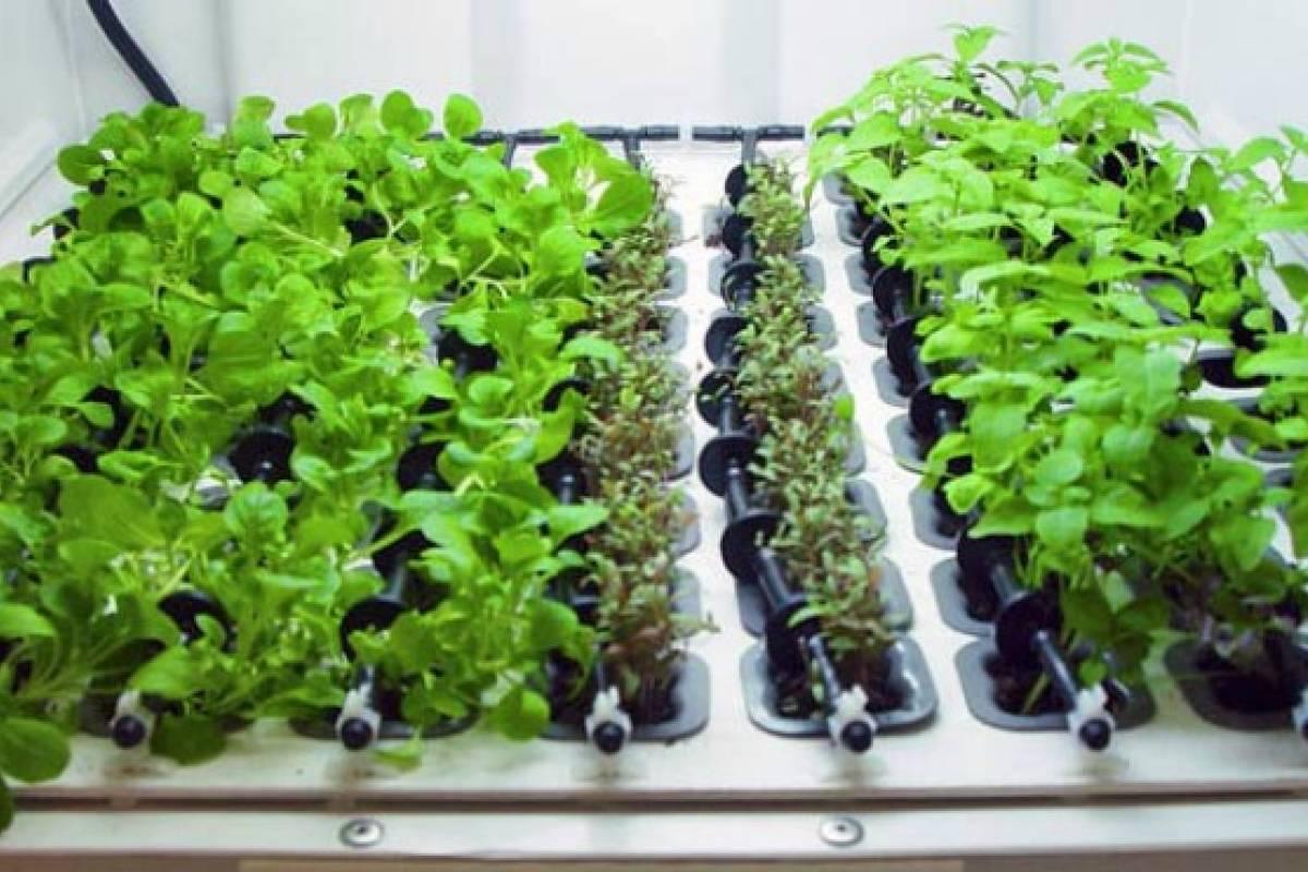 Jard n hidrop nico en tu cocina para tener hierbas frescas - Jardin hidroponico ...