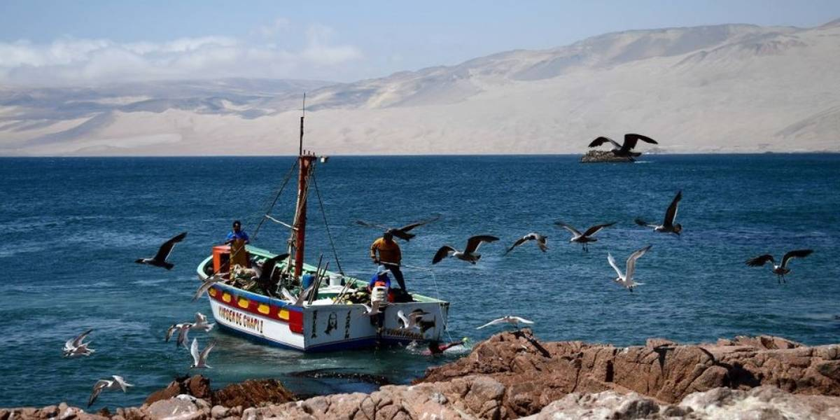 DRNA trasladará servicios a marinas de la isla