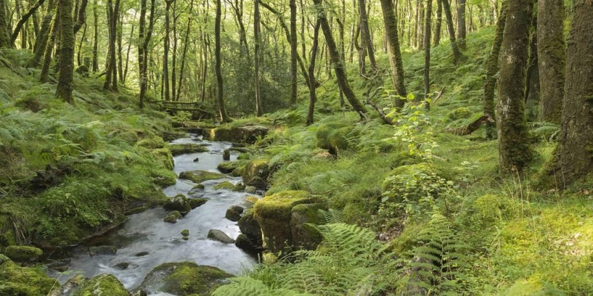 Seis de formas en las que podemos proteger los bosques en Colombia